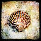 scallop by Pam Ullman