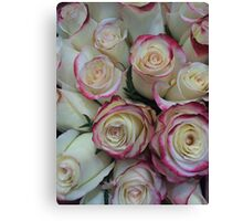 Red Tipped White Roses Canvas Print