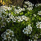 Flowering Shrub by MidnightMelody