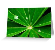 Dew Drops. Greeting Card