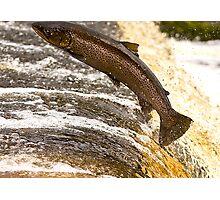 Fighting Upstream Photographic Print