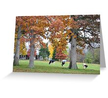 Three Cows Beneath Autumn Trees Greeting Card