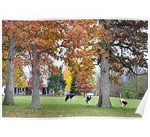 Three Cows Beneath Autumn Trees Poster
