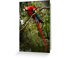 Absolutely Fabulous! Greeting Card