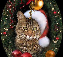 Santa Cat by aura2000