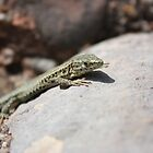 Mountain Lizzard by James Hennman