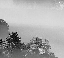 Misty Morning by Bloodnok