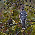 Garden Bird by citrineblue