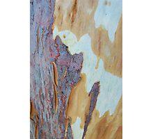 shedding bark Photographic Print