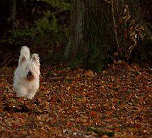 My dog crumb-1 by trainmaniac
