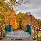 """""""an autumn walk through the wetlands"""" by Rex  Montalban"""