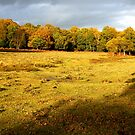 Autumn in the New Forest by Gordon Hewstone