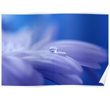 Water Drop on Flower Petal Poster