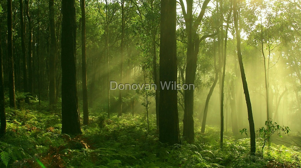 Limelight.. by Donovan Wilson