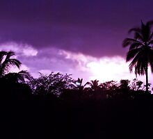 Purple Palm tree Sky by Jessica Karran