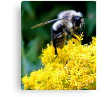 THE BEE Canvas Print
