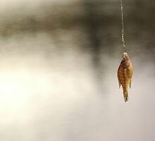 Gone Fishin'- Bringing Home Dinner  by midnightsmoker
