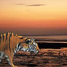 Twilight Tiger by Dawn B Davies-McIninch