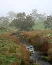 Misty Creek ~ Mount Barker by LeeoPhotography