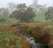Misty Creek ~ Mount Barker by LeeoPhotography