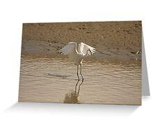 Little Egret landing 2 Greeting Card