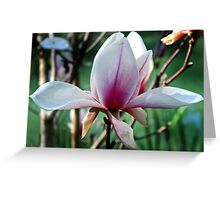 Single Magnolia Bloom Greeting Card