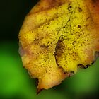 Autumn Leave by Daidalos