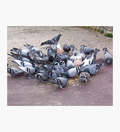 Pigeons feeding Photographic Print