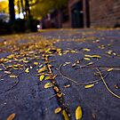 Fall 09 by Shannon Holm
