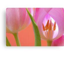 Tulips Macro Canvas Print