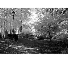 Ness Islands, Inverness Photographic Print