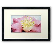 Hibiscus crown Framed Print