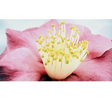 Hibiscus crown Photographic Print