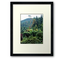 Arbutus In The Garden Framed Print