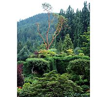 Arbutus In The Garden Photographic Print