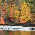 Cheat Lake WV by thorn