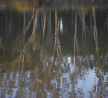 Reflections On The Murray by MissyD