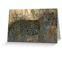 African Leopard - South Africa Greeting Card