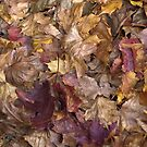 Autumn leaves  by evilcat