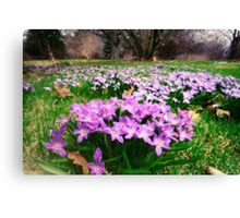First Spring Wildflowers Canvas Print