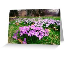 First Spring Wildflowers Greeting Card