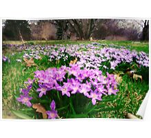 First Spring Wildflowers Poster