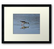 Reflections of a Black-necked Stilt Framed Print
