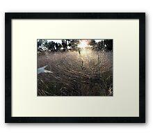 Last Light on the Gossamer Field Framed Print