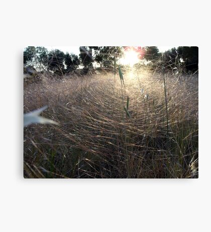 Last Light on the Gossamer Field Canvas Print