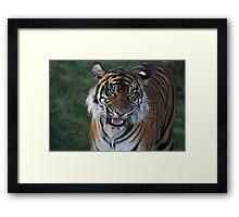 Tiger Princess Framed Print