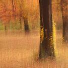 Autumnal Oak Grove by Gina Ruttle  (Whalegeek)