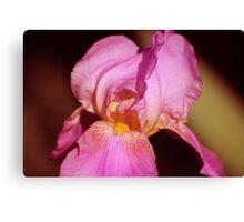 irish flower Canvas Print