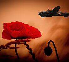 Lancaster Poppies  by Stephen Smith