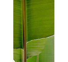Banana Leaf in Abstract 0527 Photographic Print